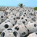 Będą sztuczne rafy w Bałtyku